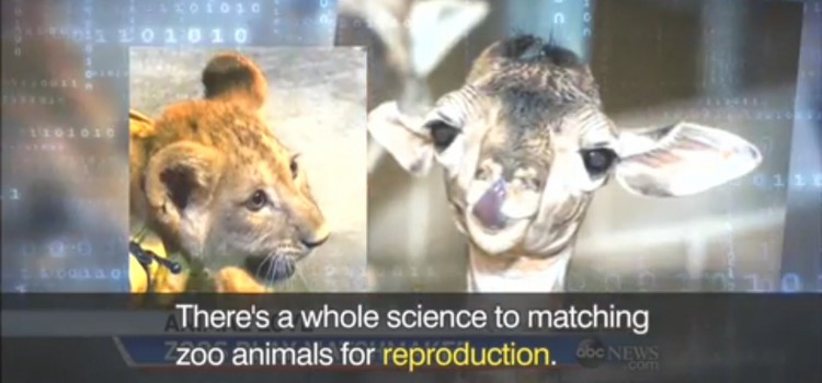 【希少動物の繁殖を目指して】reproduction, genetic health, endangered species,