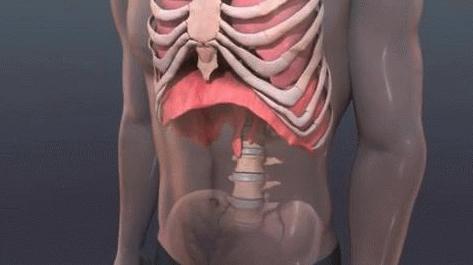 88)マルチ腹式呼吸〜横隔膜の動き
